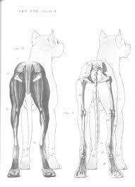 Dog Anatomy Organs Dog Anatomy Hind View Canines Pinterest Dog Anatomy
