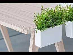 plant on desk desk plants desk plants for work youtube