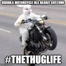 Funny Bunny Memes - funny bunny motorcycle wheelie memes imgflip