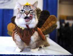 13 pictures of dogs and cats dressed up for thanksgiving