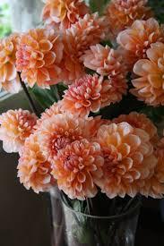 Peach Flowers 28 Best Peach Flowers Images On Pinterest Peach Flowers Flowers