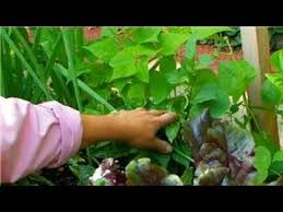 vegetable gardening vegetables to grow in a summer garden youtube