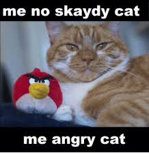 Angry Cat Meme - 25 best memes about angry cat angry cat memes