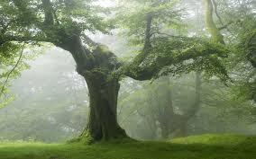 photos of nature photos of nature trees