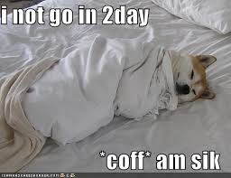 Sick In Bed Meme - i can has cheezburger akita funny internet cats cat memes and