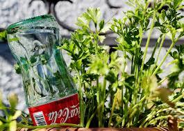 coke bottle watering