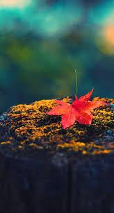 autumn pumpkin wallpaper widescreen 1043 best autumn season thanksgiving fall images on