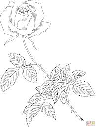 royal highness rose coloring page free printable coloring pages