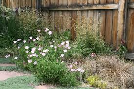 learn from u0027xperienced xeriscape gardeners habitat network