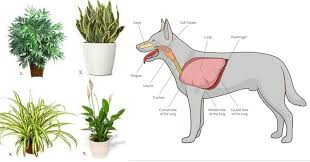 these 11 plants purify the air from cancer causing chemicals and