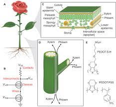electronic plants science advances