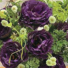 lisianthus flower black pearl lisianthus seeds from park seed