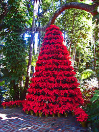 Christmas Tree Cataract Surgery by Living Our Dream St Petersburg Fl