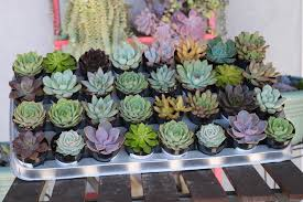 Succulent Planters For Sale by 2 5