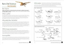 science report template ks2 barn owl conservation science educational resources the barn