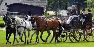 carrozze antiche moirano finimenti per cavalli e carrozze dal 1930