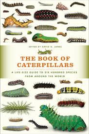 the book of caterpillars a life size guide to six hundred species