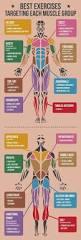 best 25 weight lifting chart ideas on pinterest muscle