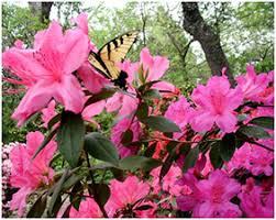 Zilker Botanical Garden About Zbg