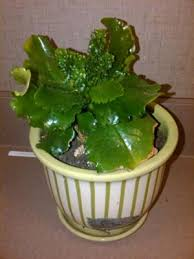 can you help me identify my house plant grows on you common house