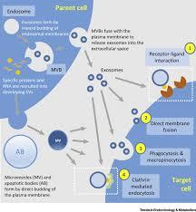 extracellular vesicles novel mediators of cell communication in