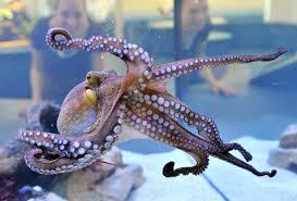 octopi be afraid be very afraid cbs houston