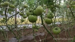 trellis netting vs raffia twine in cucumbers gardening stories