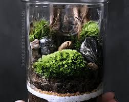 terrarium containers etsy