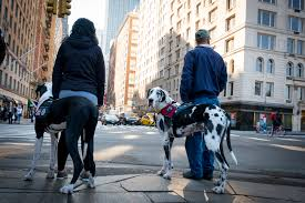 Which State Has The Most Dog Owners Per Capita According To 2016 Stats New York City U0027s Dog Population Nycedc