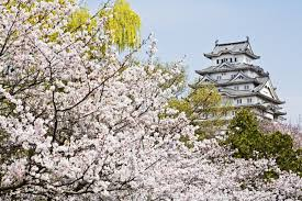Cherry Blossom Tree Facts by Here U0027s When The 2017 Japanese Cherry Blossom Season Starts Condé