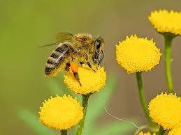 Flowers Bees Pollinate - 5 amazing honey bee pollination facts carolina honeybees