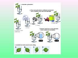 Lab Bench Transpiration Transpiration In Plants