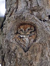 this owl in a tree oddlysatisfying