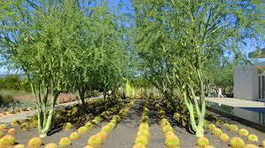 plants of the mojave ii the anneberg gardens