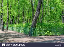 Summer Garden St Petersburg Russia - summer garden saint petersburg russia stock photo royalty free