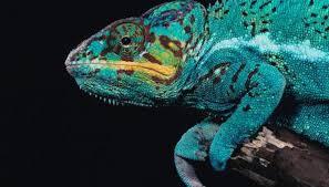 Seeking Lizard Review Do Lizards See Colors Animals Me