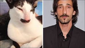 Adrien Brody Meme - cats who look like celebrities 001 adrien brody comics and memes