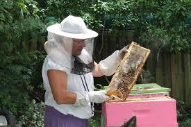 backyard beekeeper keeps neighborhood healthy the resident