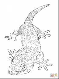 brilliant bearded dragon lizard coloring page with lizard coloring