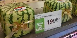 Square Watermelons Archives U2022 Melonmold Com