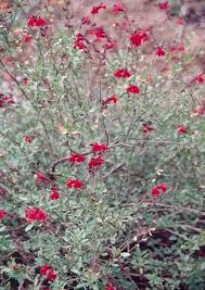Fall Garden Plants Texas - 143 best possible plants for zone 8b garden images on pinterest