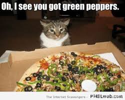 Memes About Pizza - 4 funny cat pizza meme pmslweb