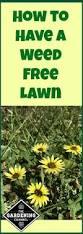 best 25 lawn weeds ideas on pinterest garden weeds lawn soil