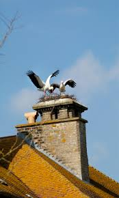 thrigby hall wildlife gardens u2013 excitement as white storks nest on
