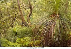 Georgia vegetaion images Ferns foliage undergrowth vegetation stock photos ferns foliage jpg
