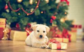 gift guide paw some presents for pets