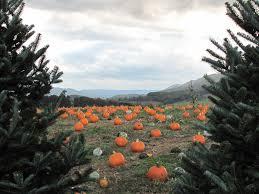 joe u0027s trees localharvest