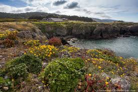 best 25 california native landscape california coastal bluff at the sea ranch