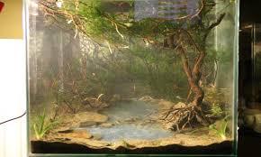 Driftwood Aquascape