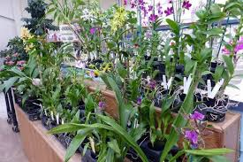 orchids care orchids 101 guide to orchids and orchid care flower gardening